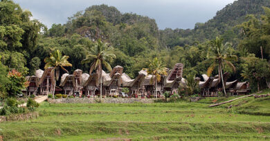 Trans Sulawesi Overland Tour 12D11N